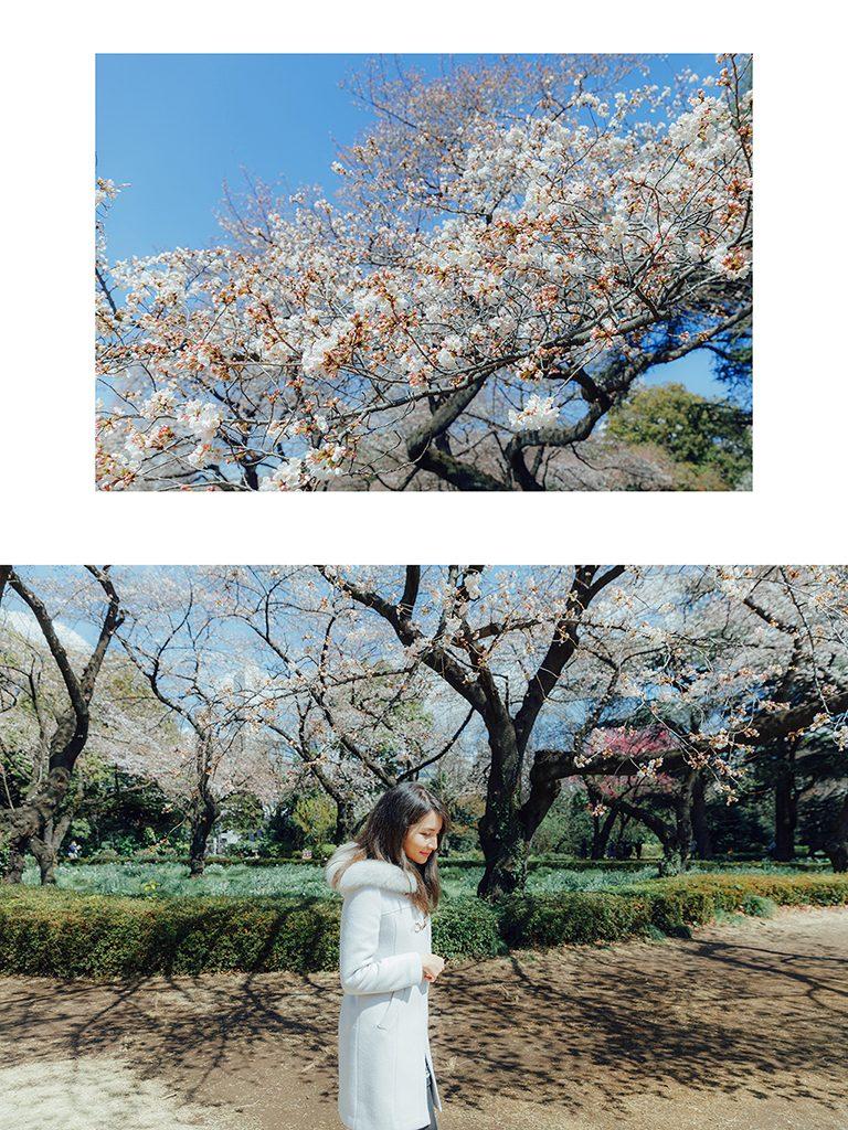 IMG 8826 2 768x1024 - 【海外寫真】桜の时 2018