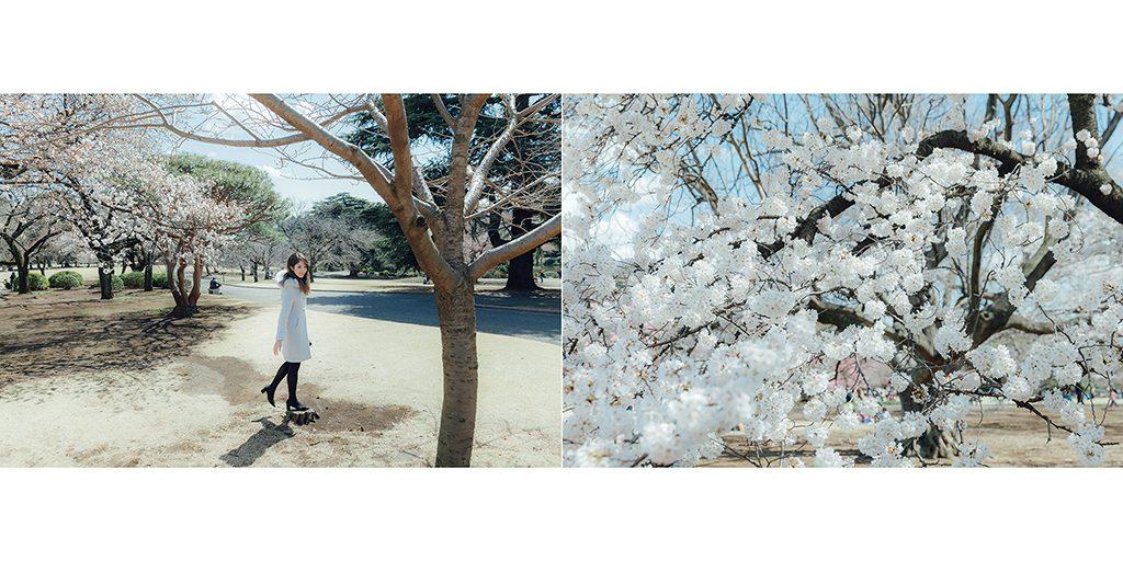 IMG 8926 2 1024x512 - 【海外寫真】桜の时 2018
