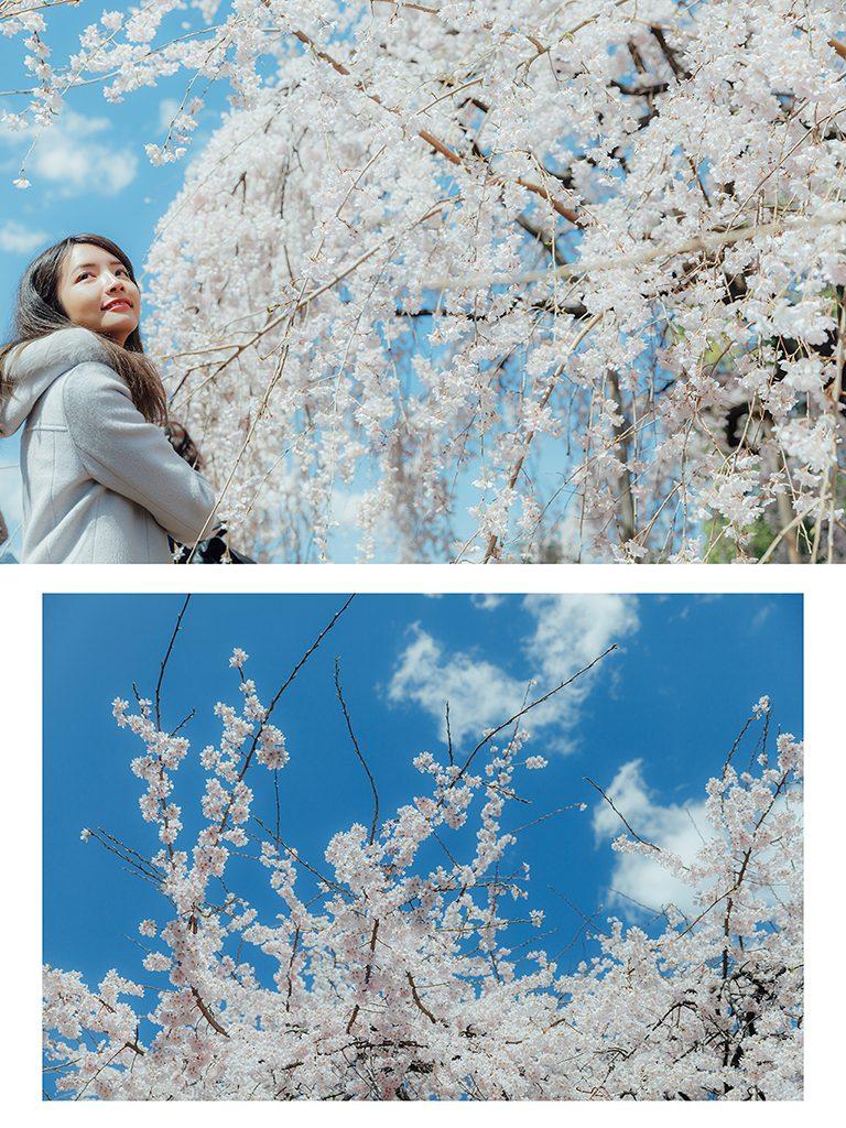 IMG 9018 2 768x1024 - 【海外寫真】桜の时 2018